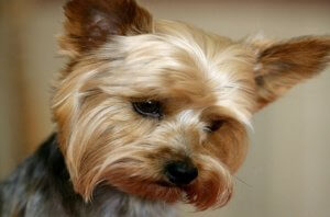 Sell My Dog Grooming Business Melbourne