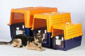 Pet Transport Business for Sale