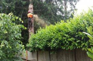 Arborist Business for Sale