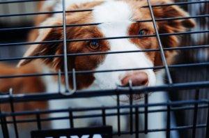Pet Enclosure Business for Sale