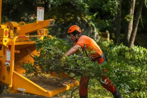 Tree Maintenance Business for Sale